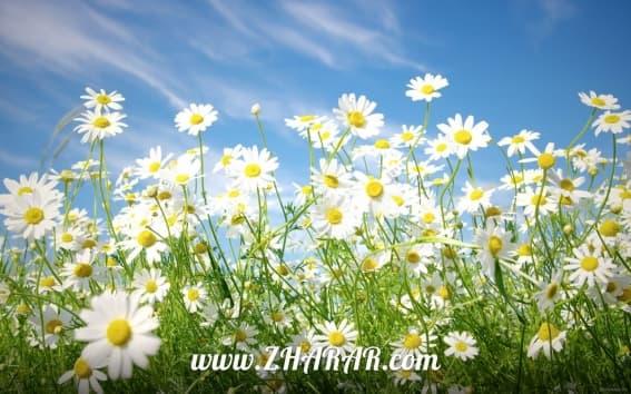 Қазақша - орысша - ағылшынша шығарма: Көктем | Весна | Spring