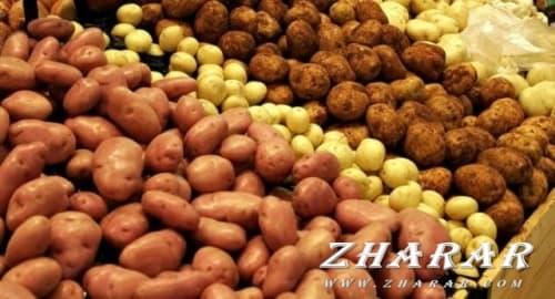 Қазақша реферат: Биология | Картоп