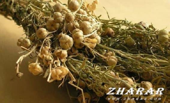Адыраспан – бел ауруларына ем