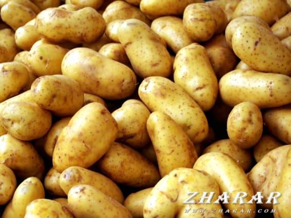 Қазақша анекдот: Картошканы жинап ал