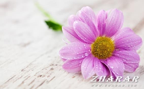 Қазақша Құттықтау - тілек: 8 Наурыз - Халықаралық әйелдер күні (Сүйікті жарыма)