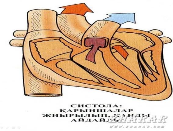 Қазақша презентация (слайд): Артериалдық гипертензияның жіктелуі. Симптоматикалық артериалды гипертензиямен салыстырмалы диагнозы. Жүкті әйелдер нефропатиясы,бүйректер поликистозы,бүйректердің ишемиялық ауруы. Склерозды артериалдық гипертензия қазақша презентация слайд, Қазақша презентация (слайд): Артериалдық гипертензияның жіктелуі. Симптоматикалық артериалды гипертензиямен салыстырмалы диагнозы. Жүкті әйелдер нефропатиясы,бүйректер поликистозы,бүйректердің ишемиялық ауруы. Склерозды артериалдық гипертензия казакша презентация слайд, Қазақша презентация (слайд): Артериалдық гипертензияның жіктелуі. Симптоматикалық артериалды гипертензиямен салыстырмалы диагнозы. Жүкті әйелдер нефропатиясы,бүйректер поликистозы,бүйректердің ишемиялық ауруы. Склерозды артериалдық гипертензия презентация слайд на казахском