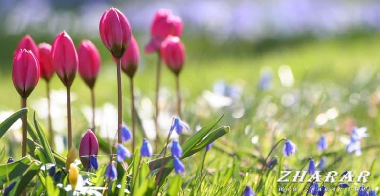 Поздравления и пожелания: 22 марта - праздник Наурыз казакша Поздравления и пожелания: 22 марта - праздник Наурыз на казахском языке