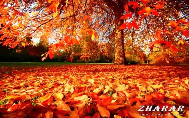 Детские стихи: Осень казакша Детские стихи: Осень на казахском языке