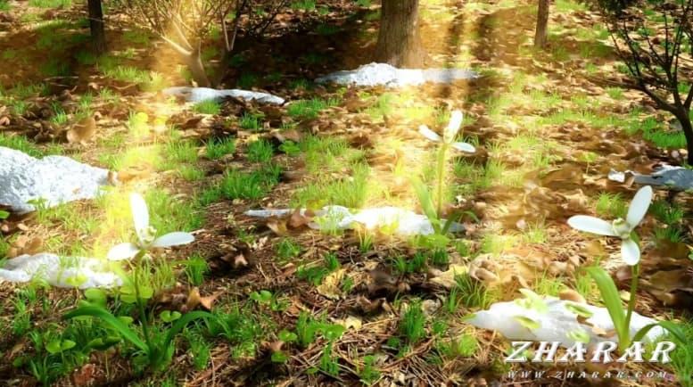 Сочинение: Весна (описание) казакша Сочинение: Весна (описание) на казахском языке