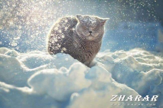 Стихи: Зима казакша Стихи: Зима на казахском языке