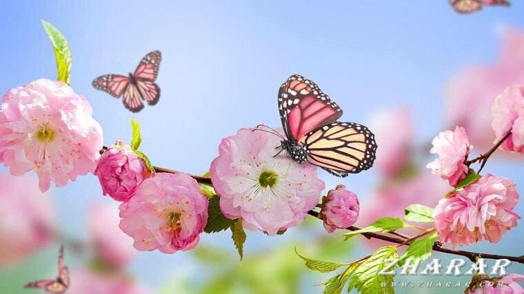 Загадки с ответами: Весна (март, апрель, май) казакша Загадки с ответами: Весна (март, апрель, май) на казахском языке