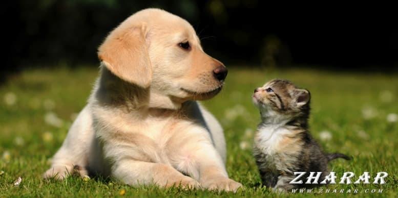 Загадки с ответами: Домашние животные (кот, собака, лошадь, курица, корова, коза) казакша Загадки с ответами: Домашние животные (кот, собака, лошадь, курица, корова, коза) на казахском языке