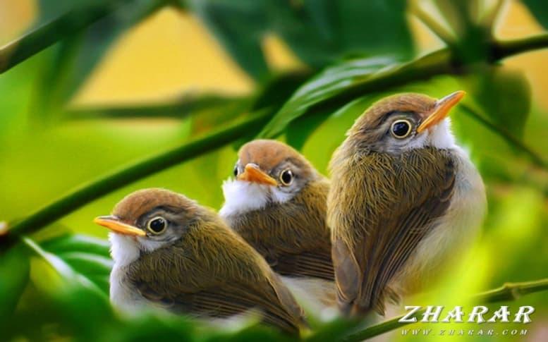 Загадки с ответами: Птицы казакша Загадки с ответами: Птицы на казахском языке