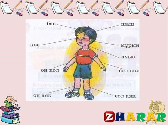 Қазақ тілінен сабақ жоспары: Дене мүшелері (1 сынып, 1 бөлім )
