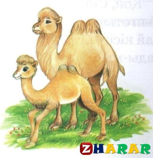 Қазақ тілінен сабақ жоспары: Үй жануарлары (4-сабақ) (1 сынып, 4 бөлім )