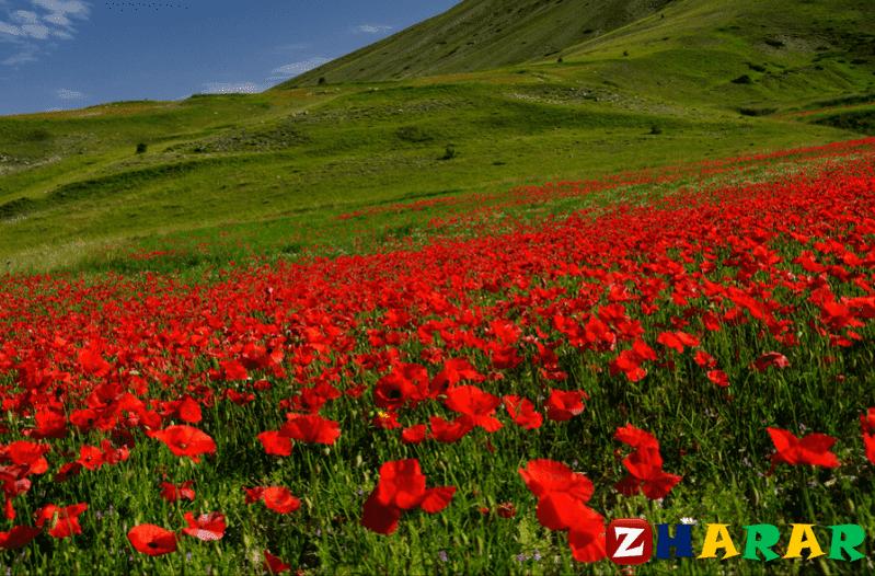 Қазақ тілінен сабақ жоспары: Қазақстан туралы өлең шығару №2 (1 сынып, 6 бөлім )
