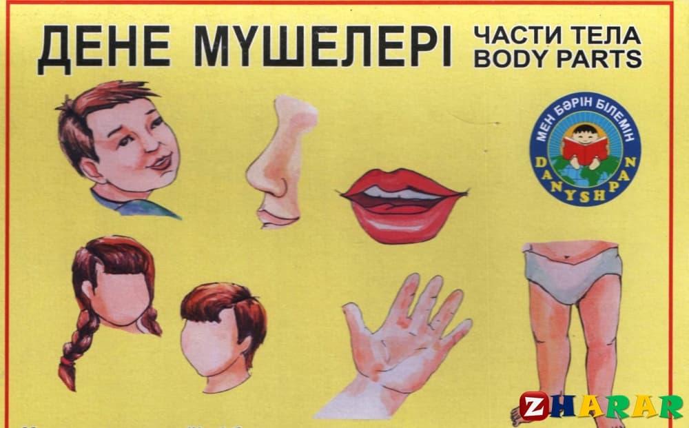Қазақ тілінен сабақ жоспары: Менің денем – оқылым №3 (1 сынып, 8 бөлім )