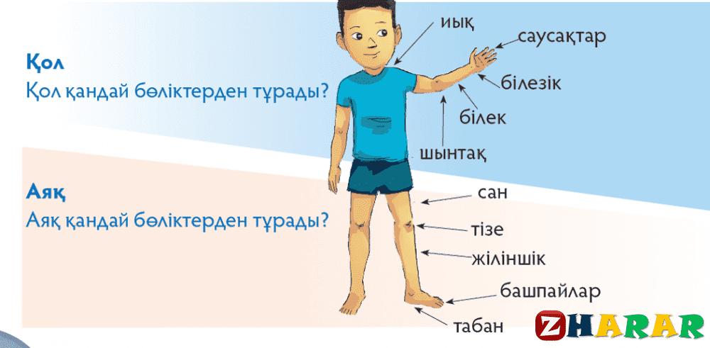 Сауат ашудан сабақ жоспары: Адам  (1 сынып,1 бөлім ) казакша Сауат ашудан сабақ жоспары: Адам  (1 сынып,1 бөлім ) на казахском языке