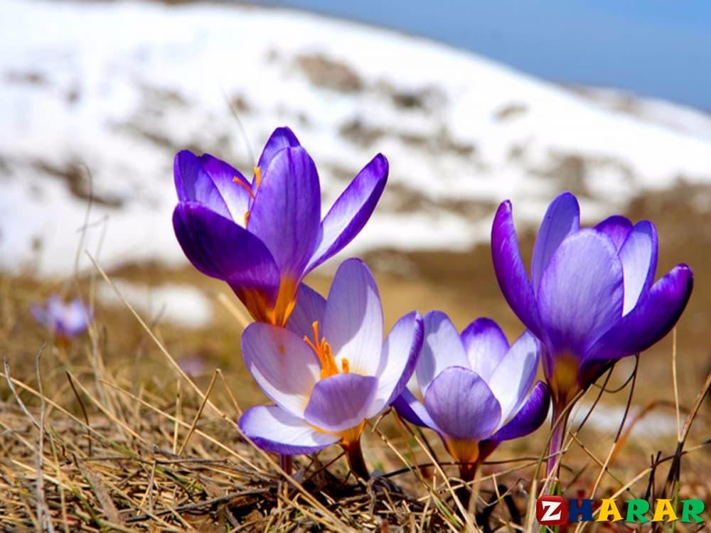 Қазақ тілінен сабақ жоспары: Көктем кереметтері (3 сынып, II тоқсан, 3 бөлім)