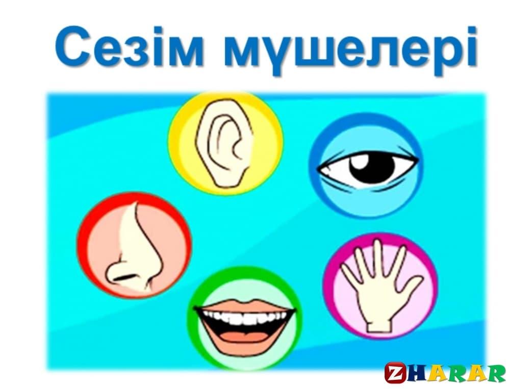 Қазақ тілінен сабақ жоспары: Сезім мүшелері туралы не білемін? (2 сынып, I тоқсан)