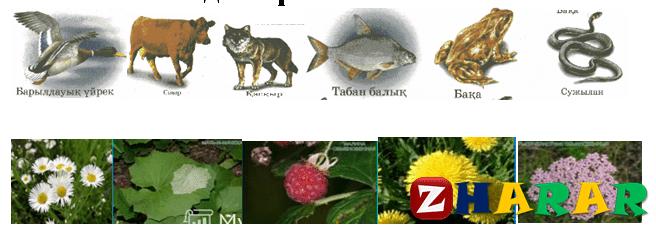 Географиядан сабақ жоспары: Өсімдік әлемі мен жануарлар дүниесін қорғау №1 (8 сынып, II тоқсан)